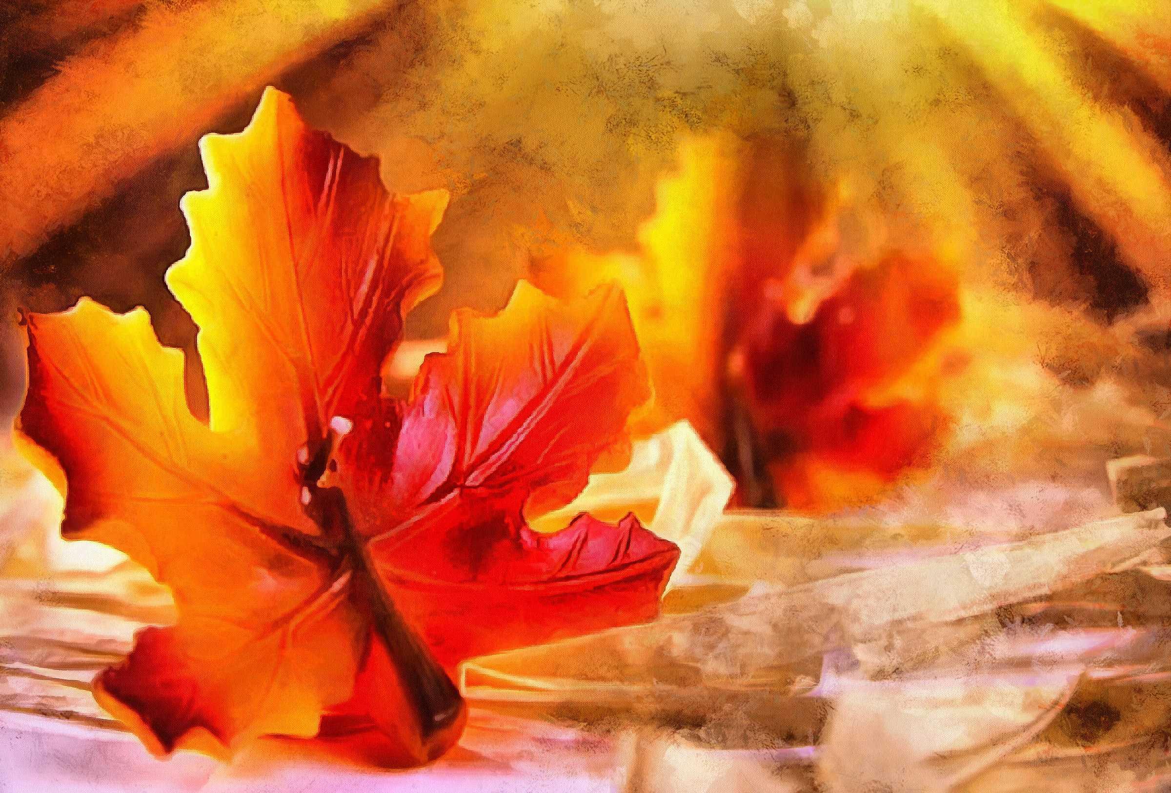 <br>maple leaf, leaf, red leaf, fall,