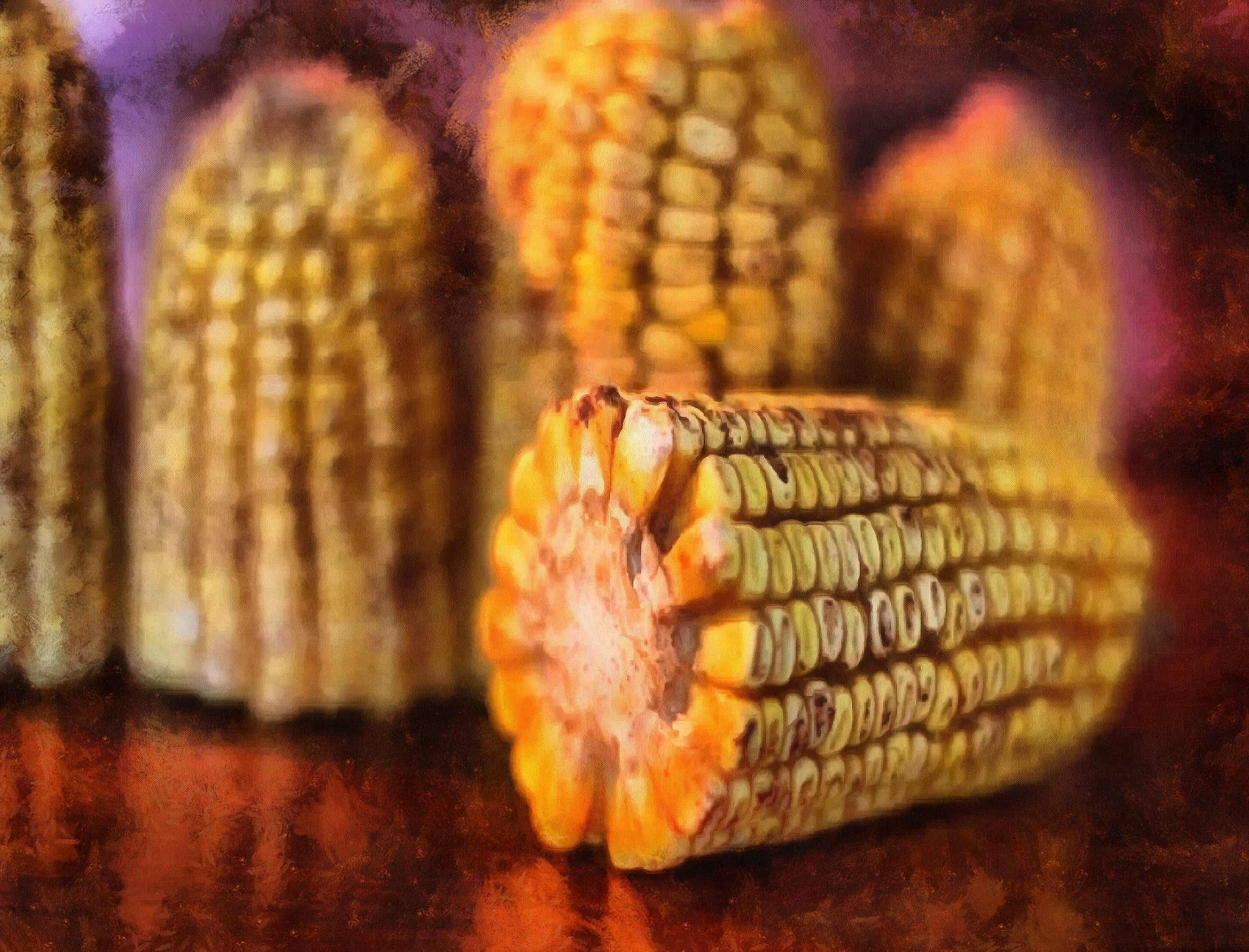<br>corn on the cob, corn cobs, corn seeds,