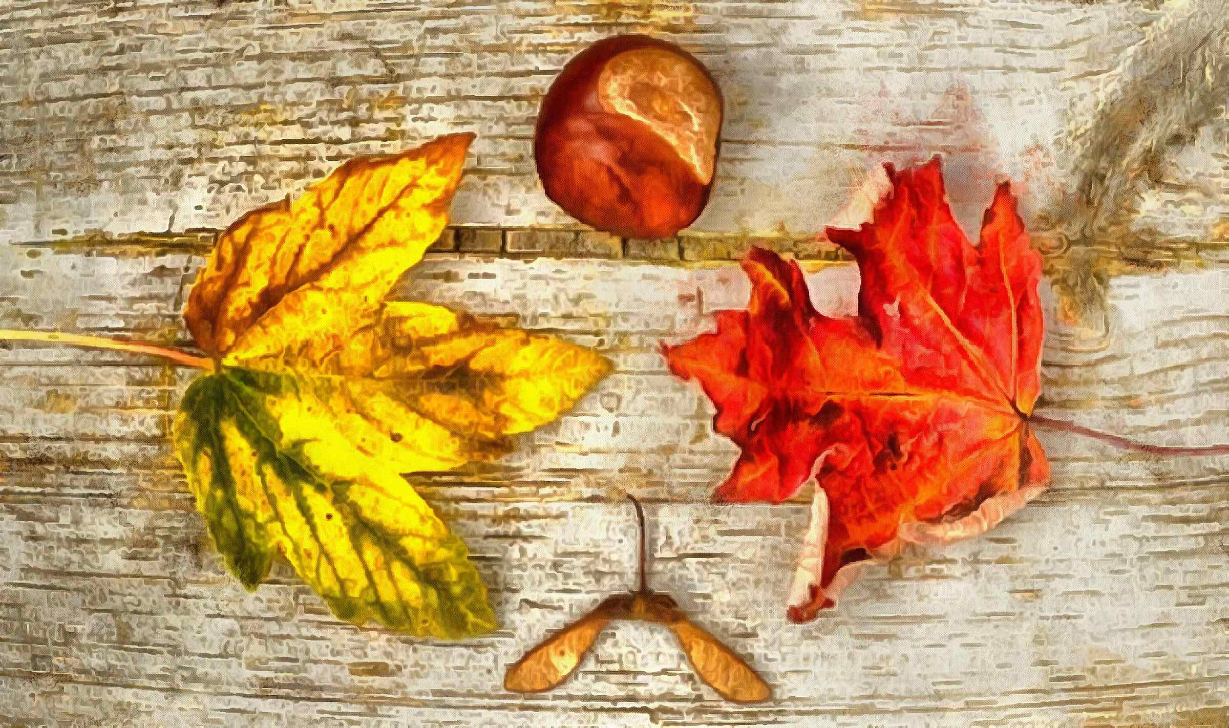<br>leaves, autumn, brown, wooden flooring,