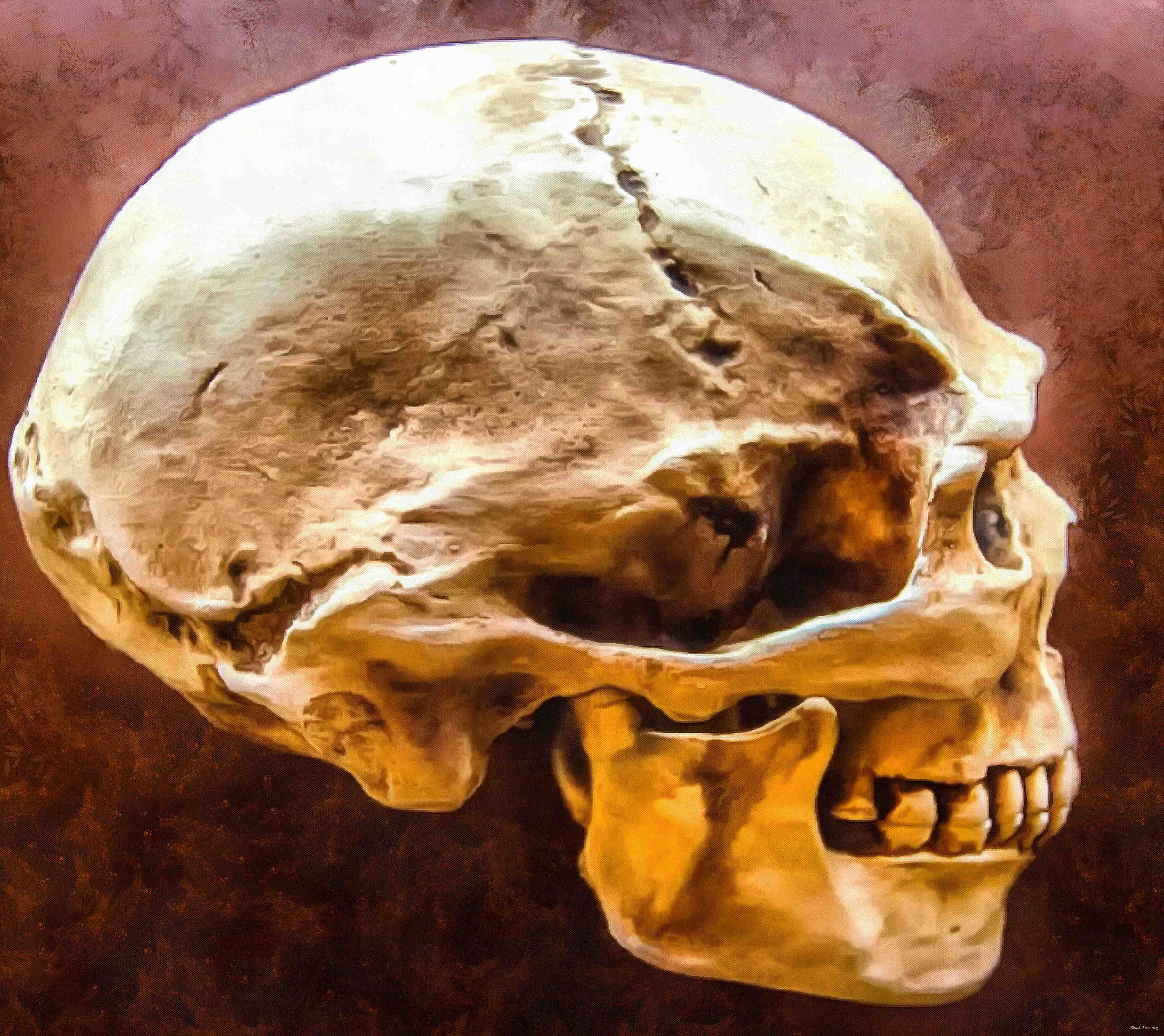 skull, head, bones, horror, halloween - halloween free image, free images, public domain images, stock free images, download image for free, halloween stock free images!