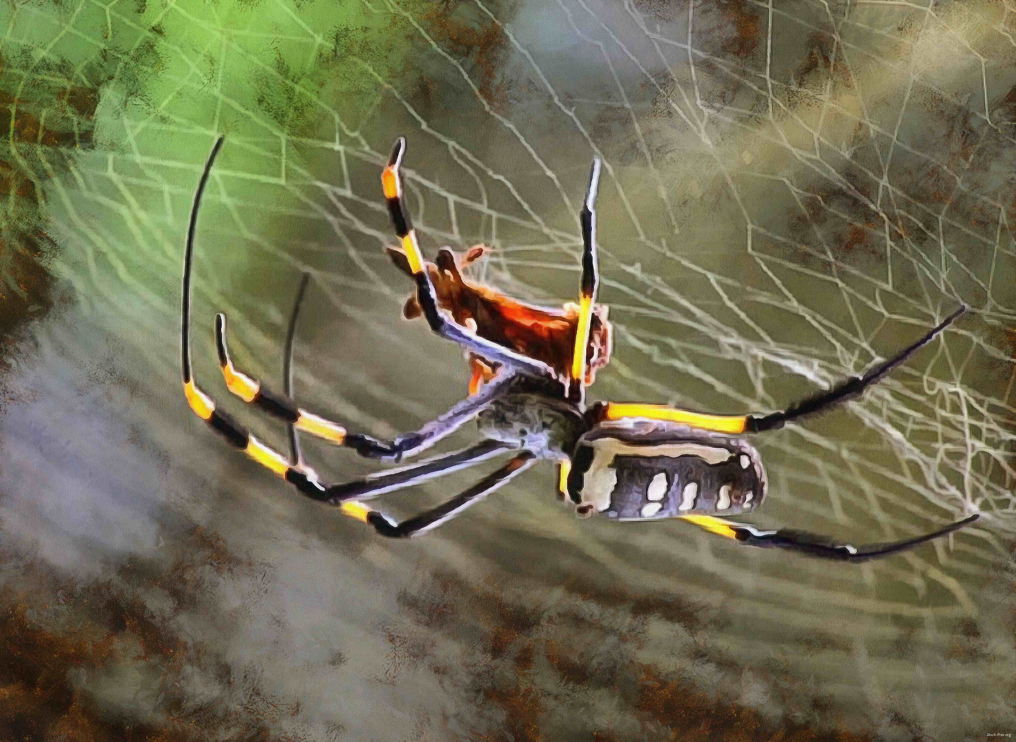 spider, spiders, horror, arachnids, villi, legs, scary, cobweb, insects, halloween, - stock free images, public domain, free images, download images for free, public domain photos, free stock image