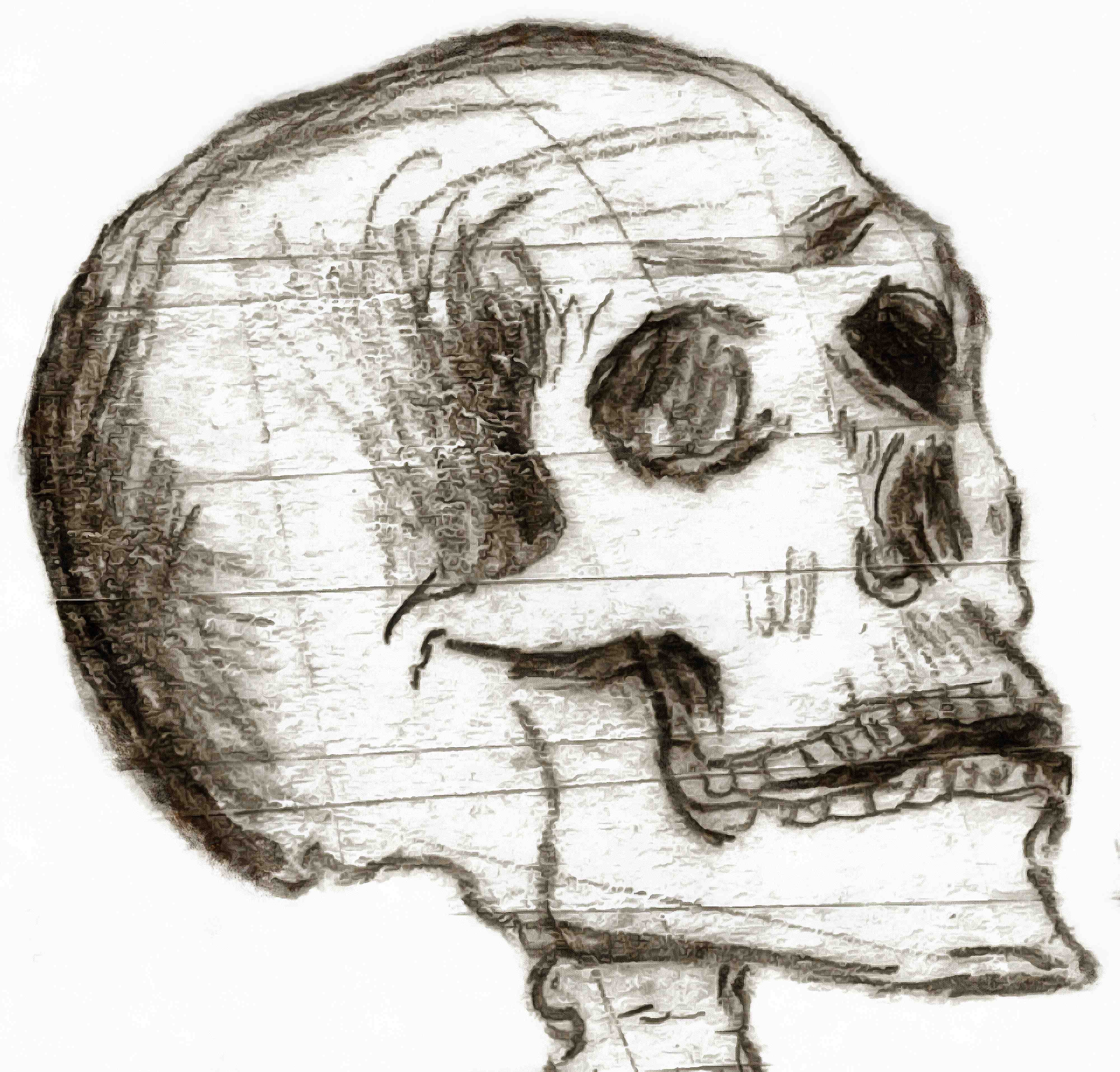skull, head, bones, horror, skeleton, fear, smile, halloween - halloween free image, free images, public domain images, stock free images, download image for free, halloween stock free images