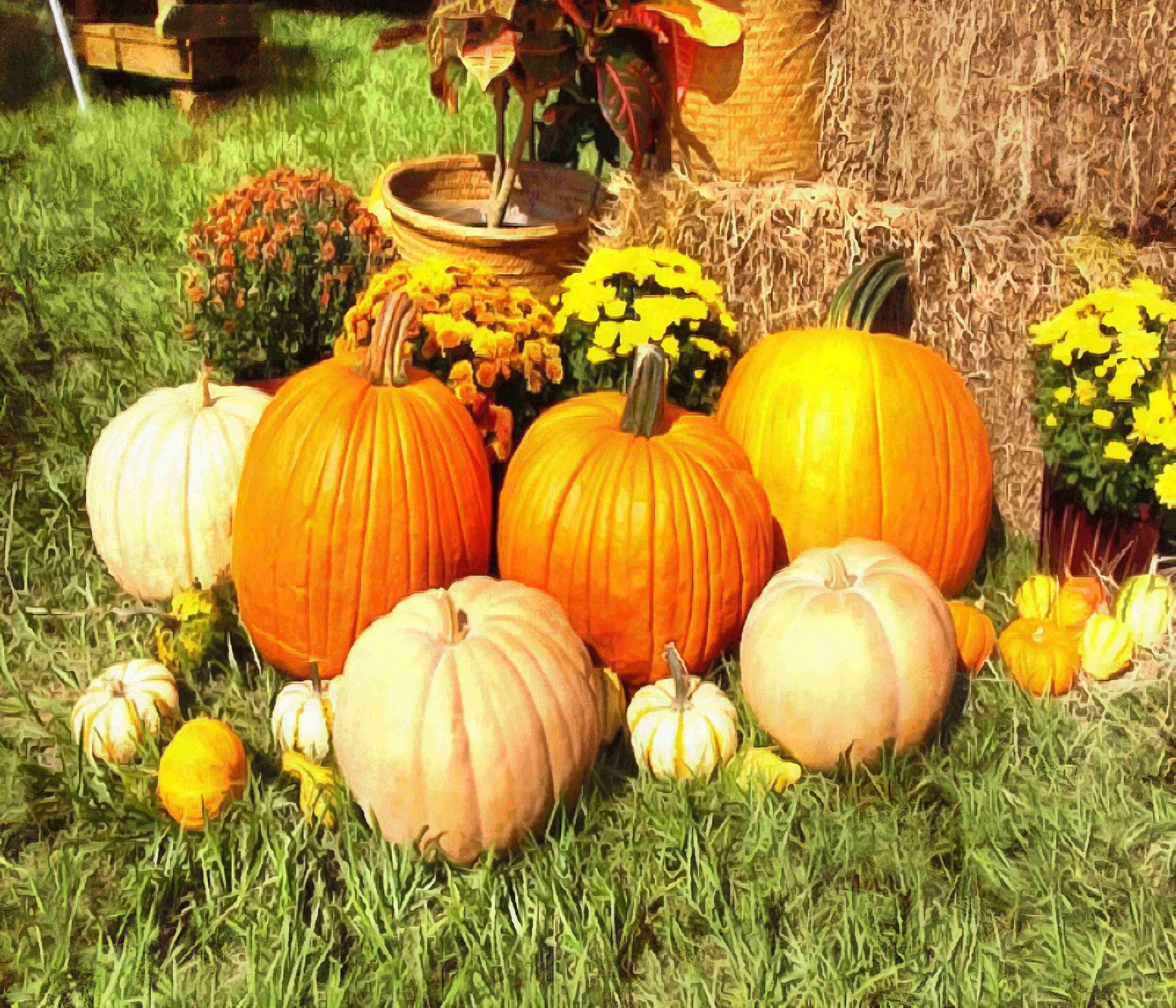 pumpkin, wheelbarrow, cart, trade, tray, stall, holiday, lots of pumpkins, garden, spooky, halloween -  stock free photos, public domain images, download free images, free stock images, public domain