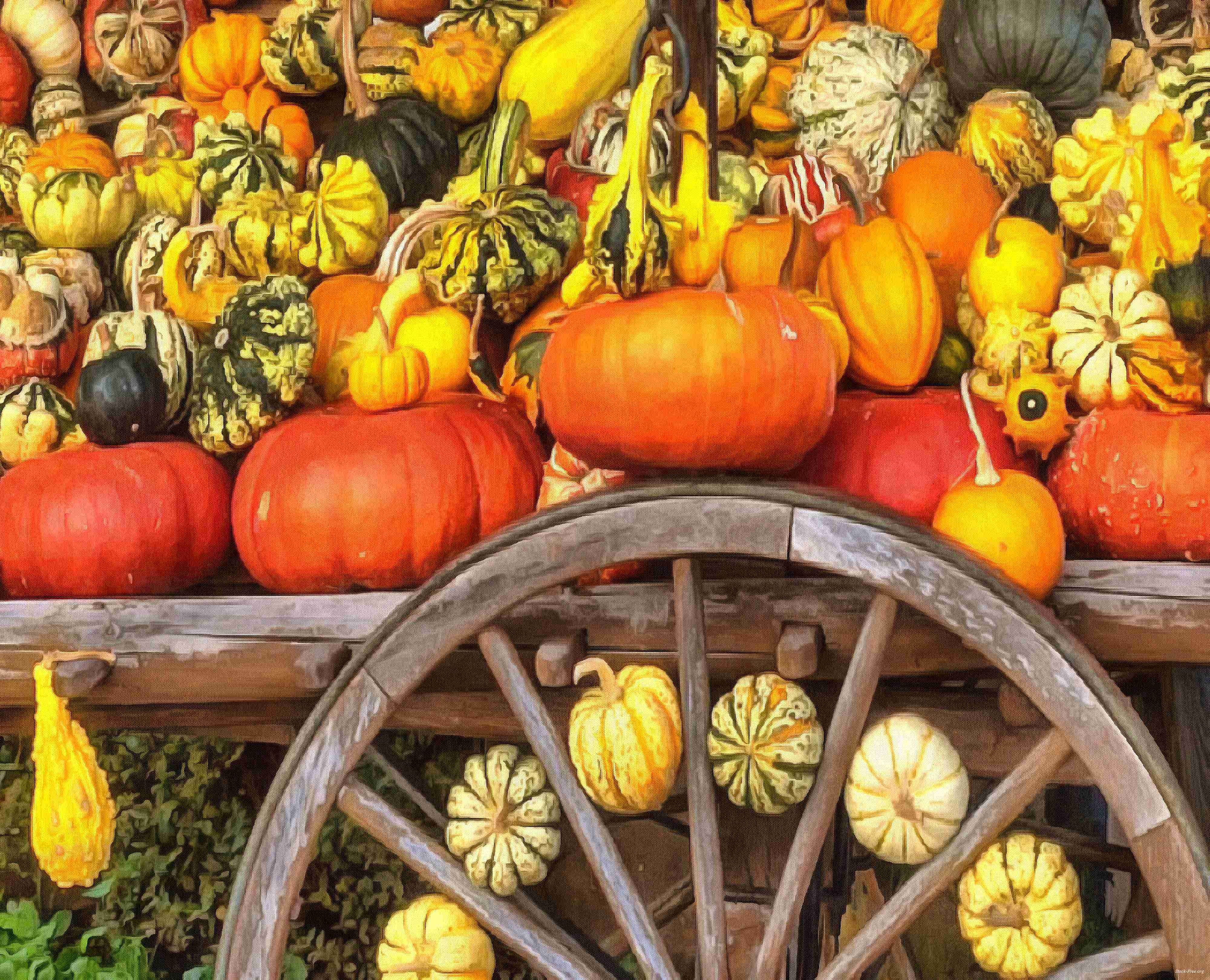 pumpkin, wheelbarrow, cart, trade, tray, stall, holiday, lots of pumpkins, garden, spooky, halloween -  stock free photos, public domain images, download free images, free stock images, public domain