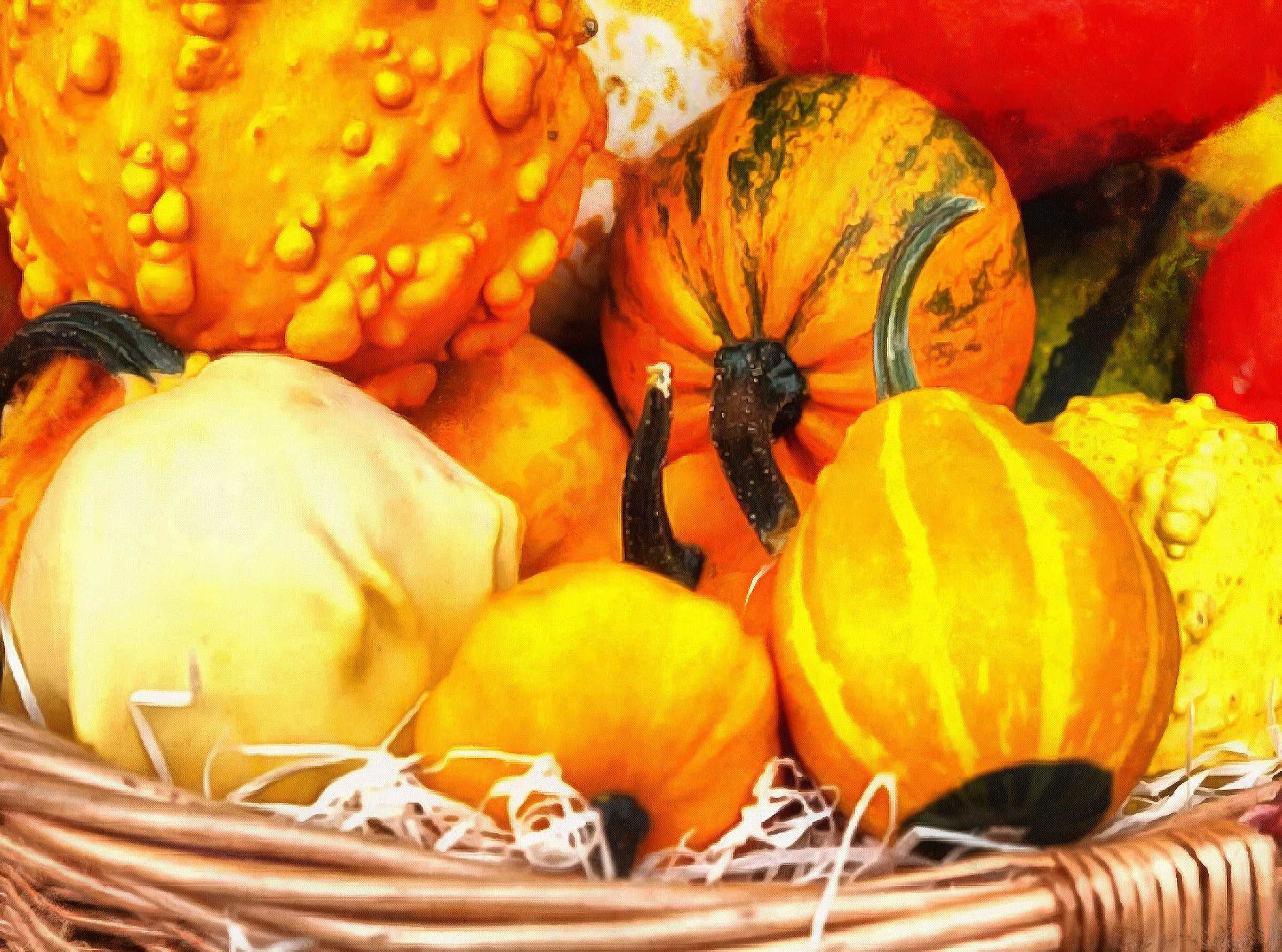 pumpkin, thanksgiving, vegetables, harvest, holiday, - thanksgiving, stock free image, public domain photos, free stock photo, download public domain images.