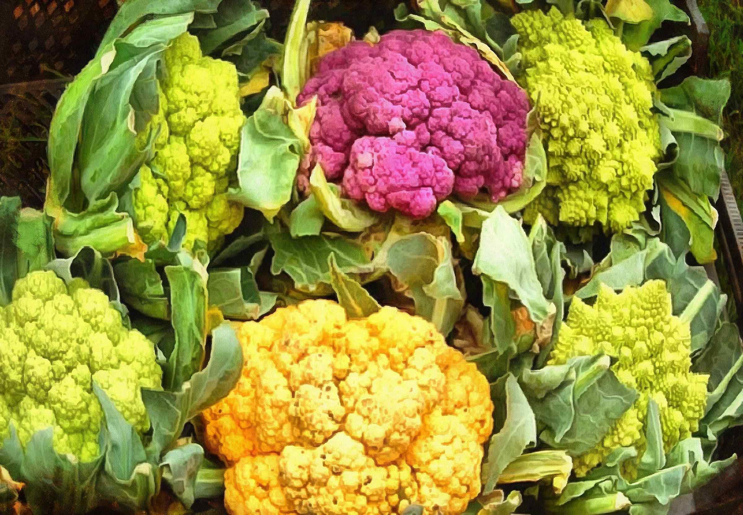 <br>cabbage, cauliflower, cabbage flowers, cabbage