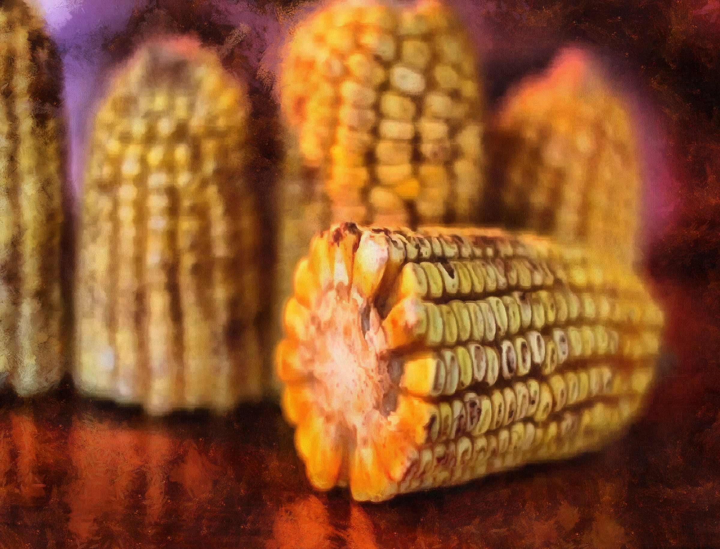 <br>corn on the cob, corn cobs, corn seeds,