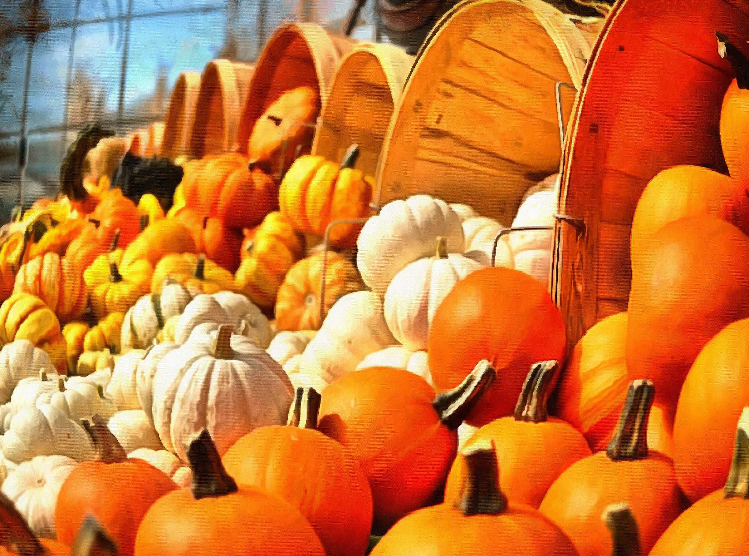 pile, lot of, pumpkins, thanksgiving, vegetables, harvest ...Thanksgiving