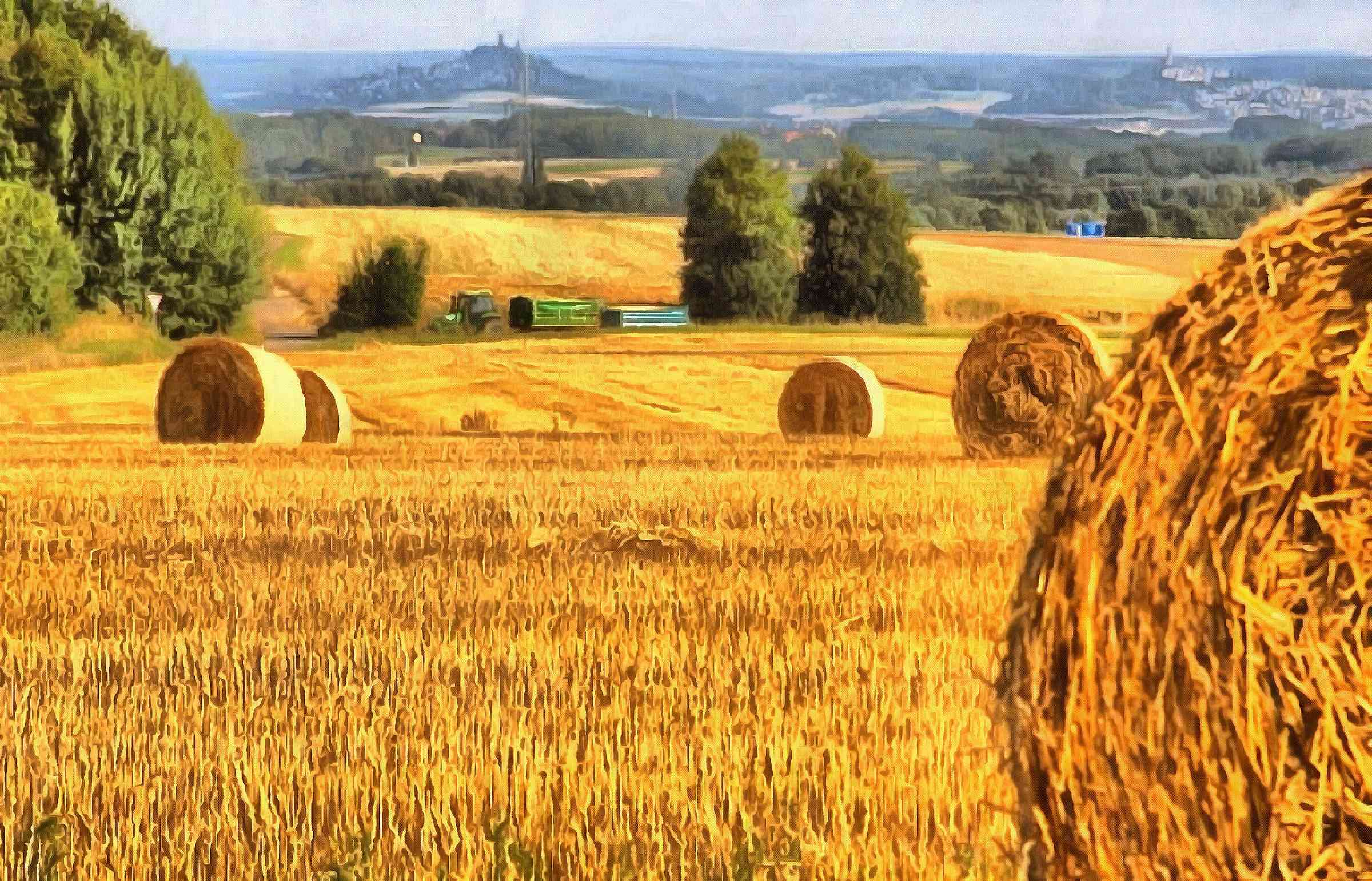 Field Harvest Wheat Haystack