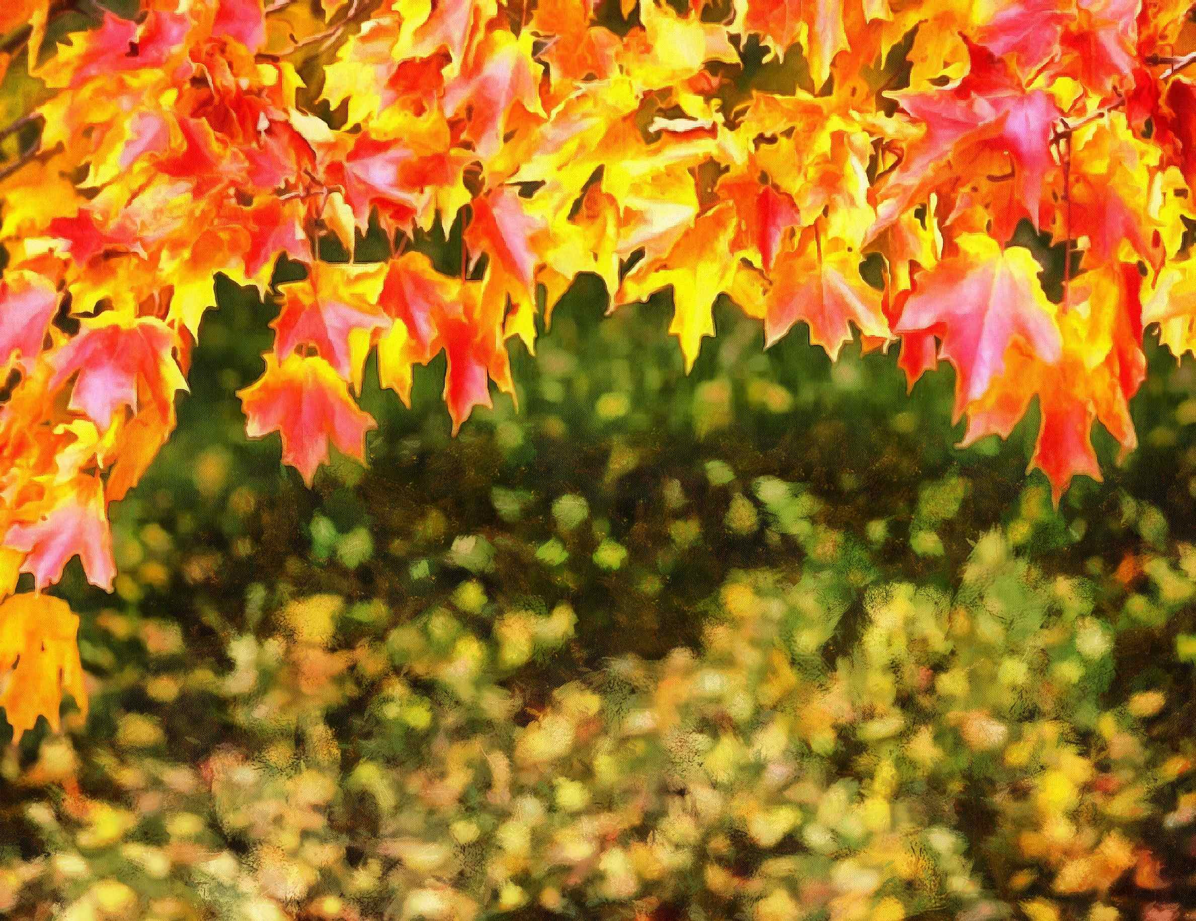 <br>autumn, red leaves,  leaves, leaf,