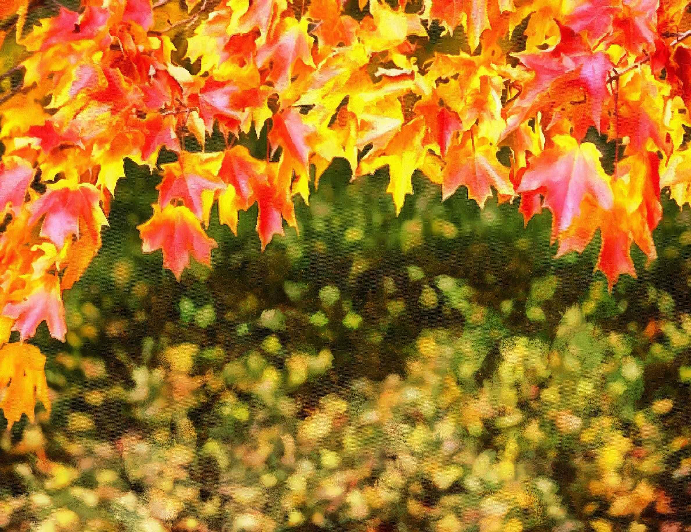 autumn  red leaves  leaves  leaf