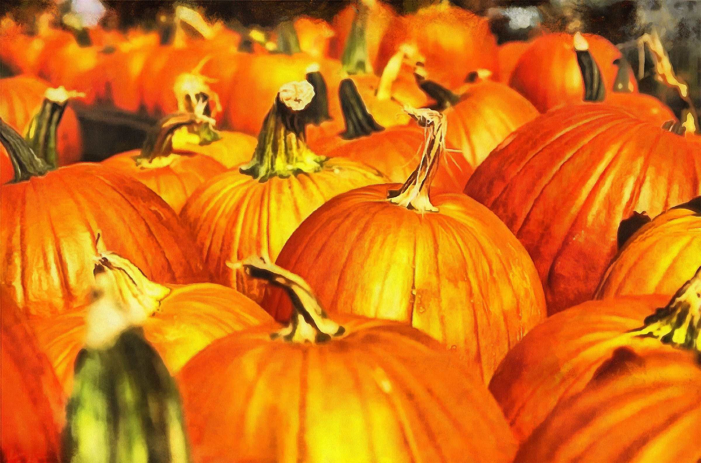 thanksgiving pumpkins,  ripe, crop, pumpkins,  pumpkin, yield, vegetables, holiday,  - thanksgiving, stock free image, public domain photos, free stock photo, download public domain images.