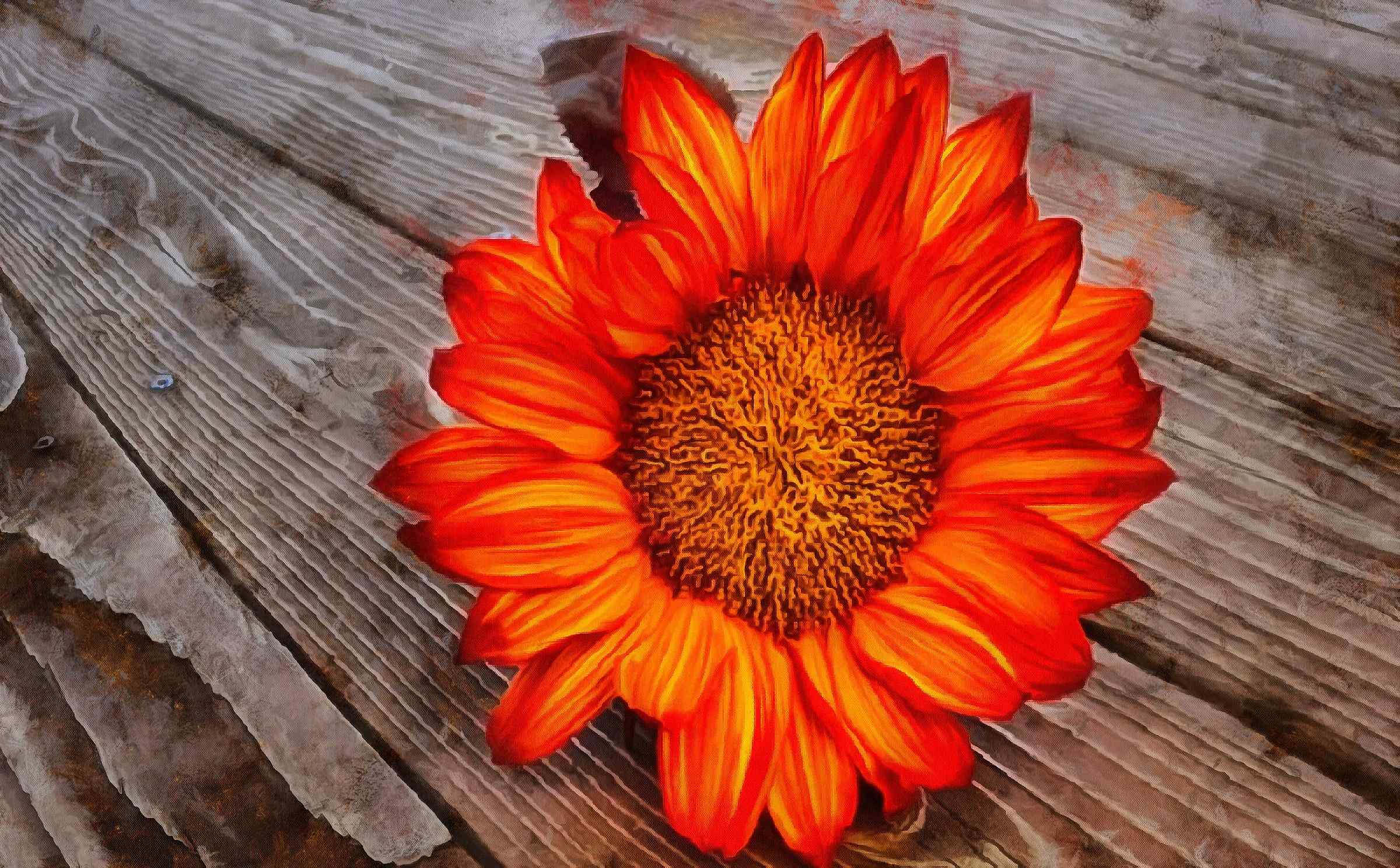 <br>flower, beautiful flower, a flower on the wooden floor