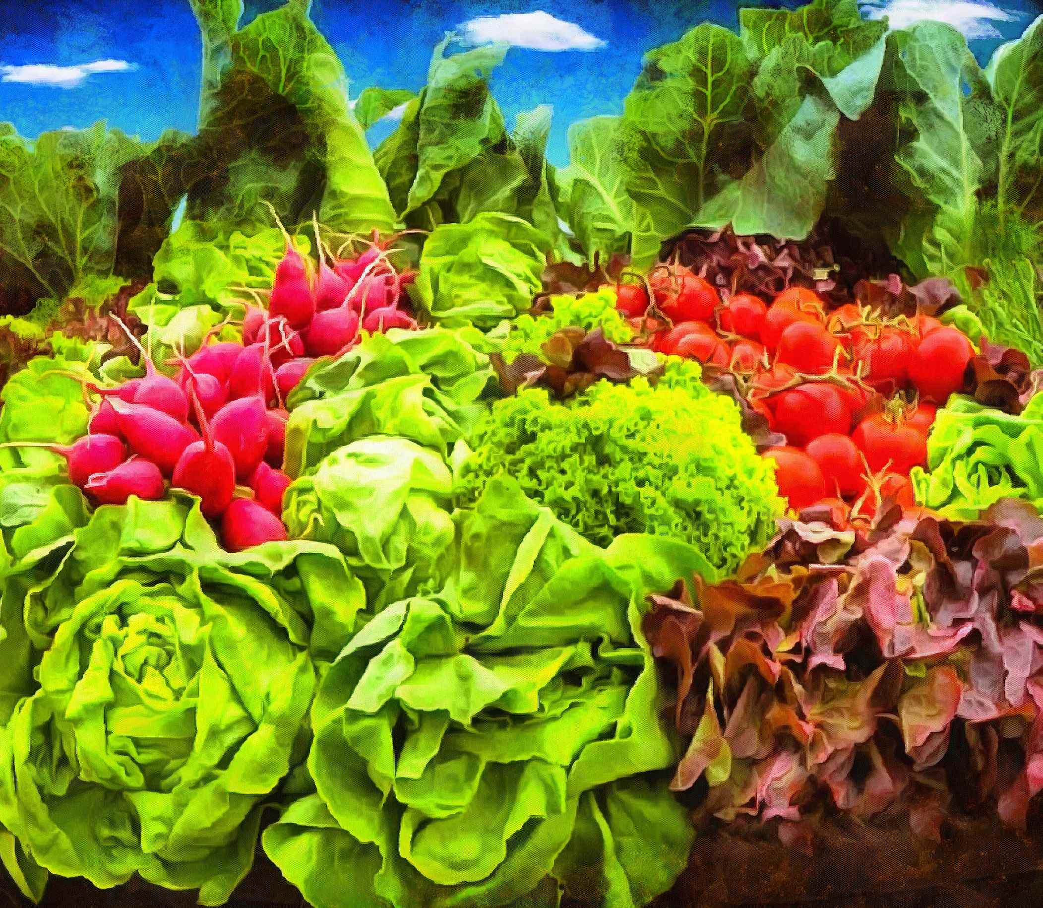 greens, radishes, vegetables, harvest,