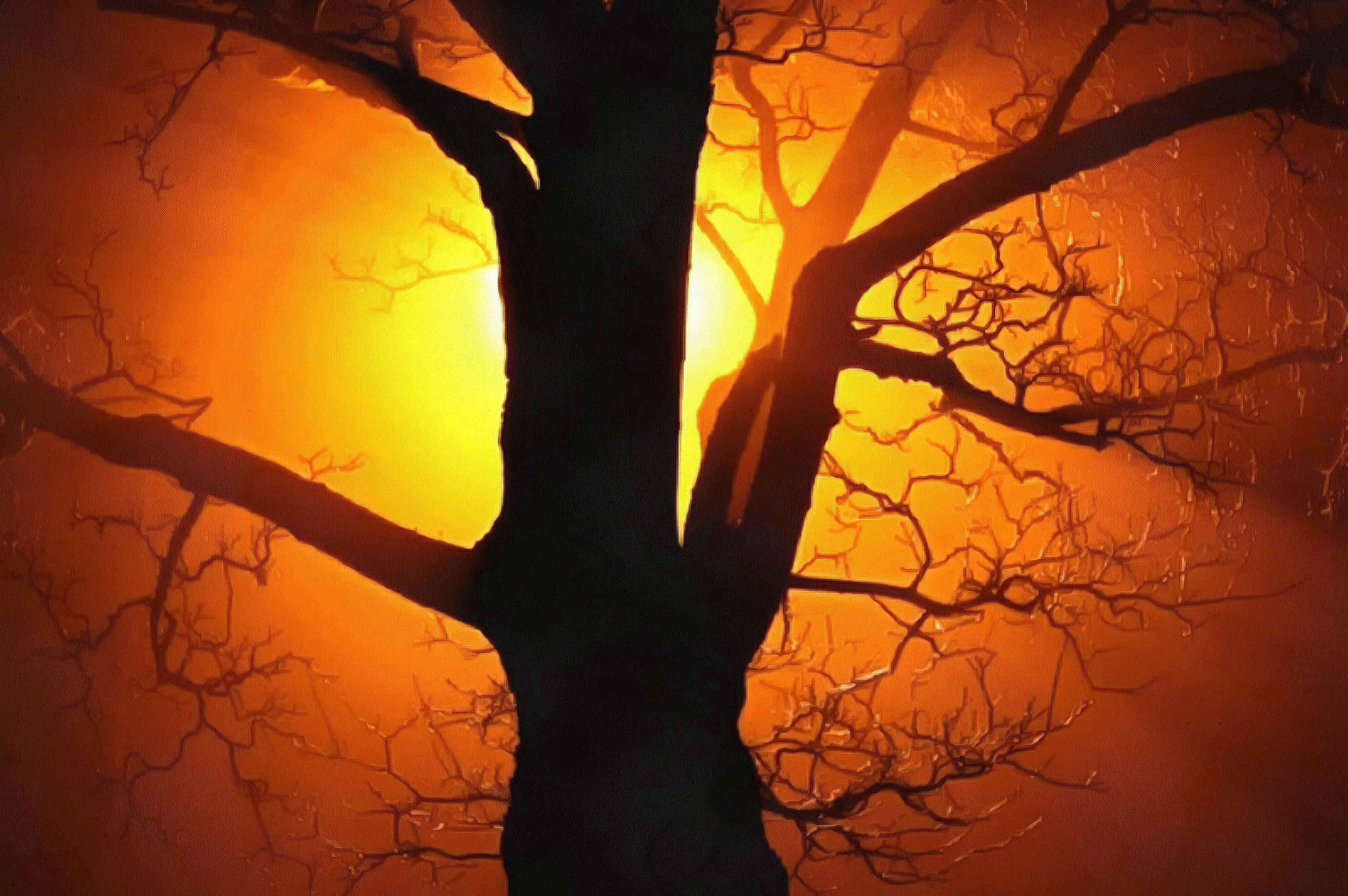 nature, beautiful, night, branch, light, dark, , silhouette, old, color, bright, golden, effect, tree, yellow orange, abstract, background, ray, fog, black, stock free images, free illustrtions