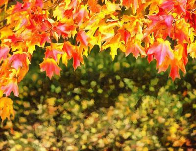 autumn, red leaves,  leaves, leaf,