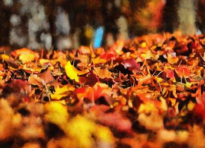 autumn, red leaves, yellow leaves, leaf,