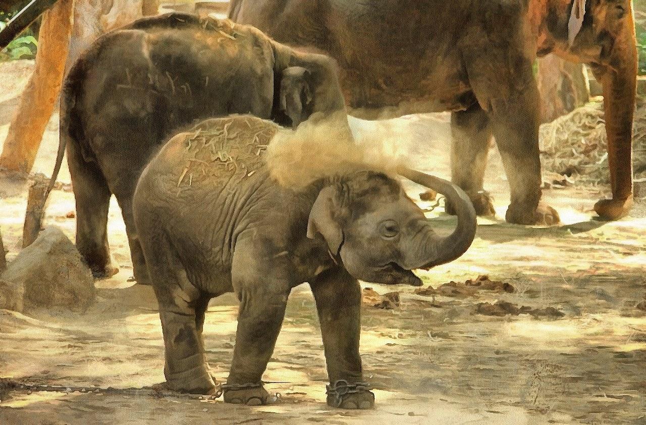 Baby Animals, Baby Animal Photos, Animal Baby images, Free Stock Baby Animal Photos - Public Domain - Stock Free Images - Public domain!