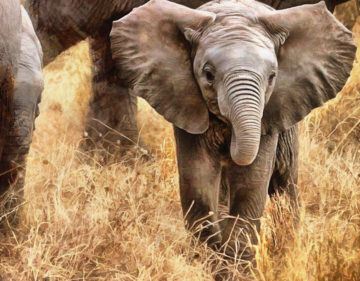 Baby animal photos, Baby animals, Cute Animals, Animals baby pictures, baby animals free images - Public domain - Stock Free Images - Public domain!