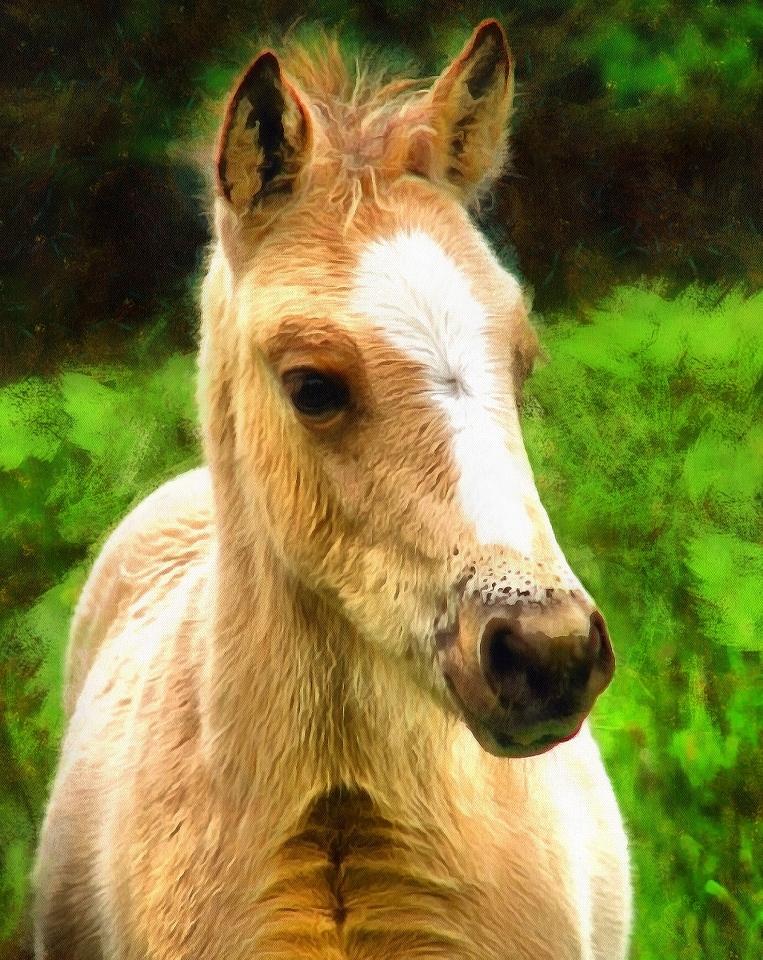 Baby Animals Photos Photos Of Small Animals Public Domain