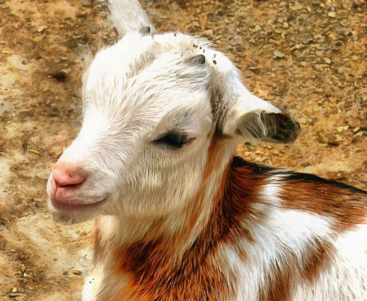 Baby animals photos, photos of small animals, - Public domain, Cute Animals, Animals baby pictures, baby animals free images - Public domain