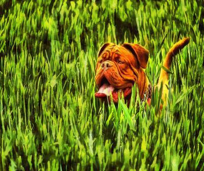 Bulldog, dog, red dog, English bulldog, bulldog free image, stock free image, public domain image, royalty free image, free image!