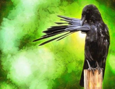 crow, flying, bird, birds, feathers, halloween, -  stock free photos, public domain images, download free images, free stock images, public domain