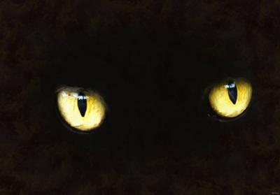 snout, cat, kitten, furry, eyes, Purring, spooky, halloween, -  stock free photos, public domain images, download free images, free stock images, public domain