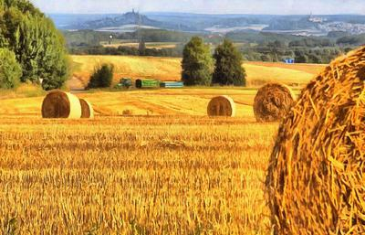 field, harvest, wheat, haystack,