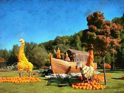 Field pumpkins, harvest a lot of pumpkins,