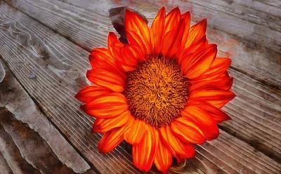 flower, beautiful flower, a flower on the wooden floor