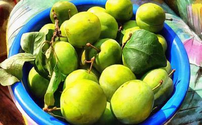 apples, holiday, fruit, wealth, summer,