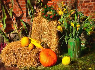 hay, straw, pumpkins, harvest, harvesting,
