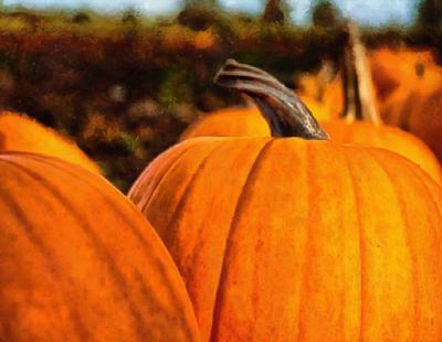vegetables, harvest, pumpkin, thanksgiving, holiday,