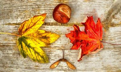leaves, autumn, brown, wooden flooring,