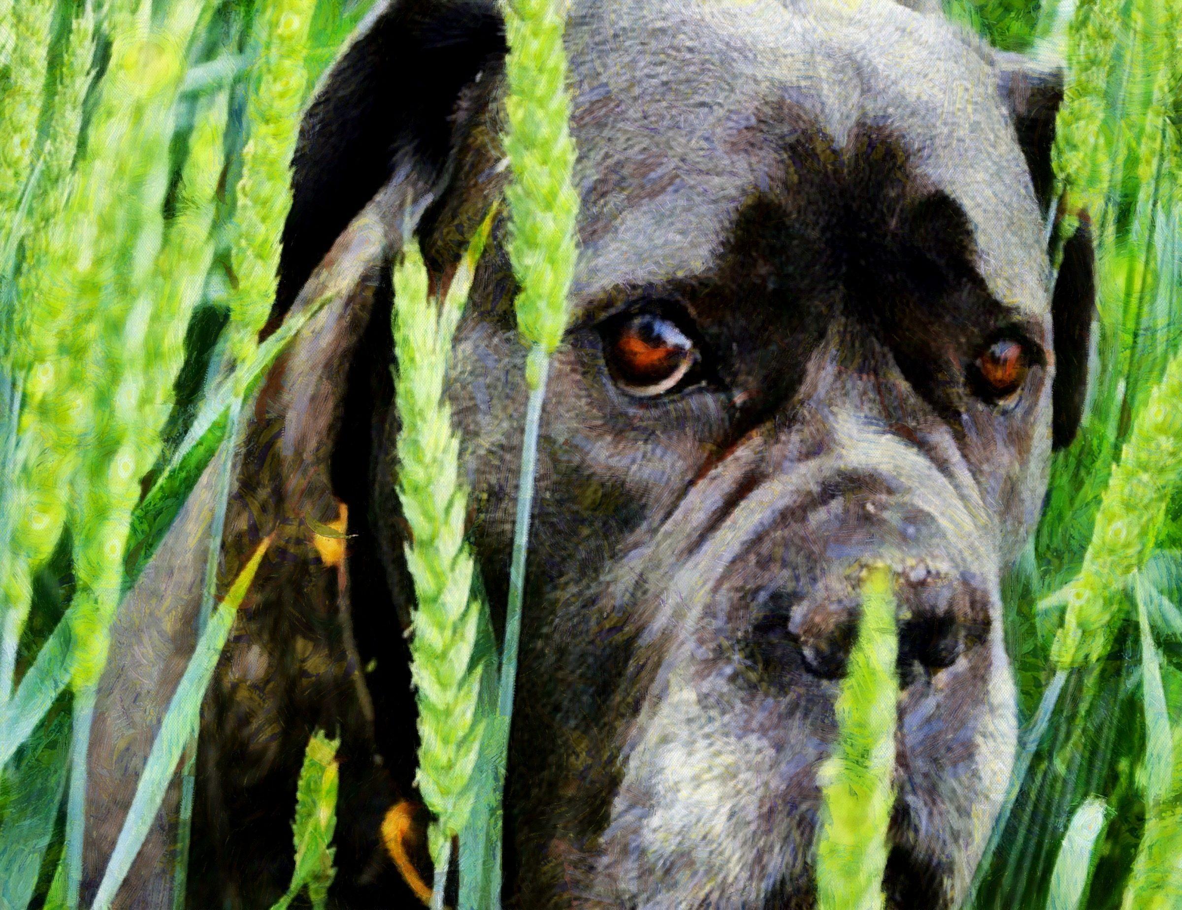 dog, puppy, small dog, dog playing, dog looking, nice dog, dog free image, dog free picture, license test dog, public domain image!