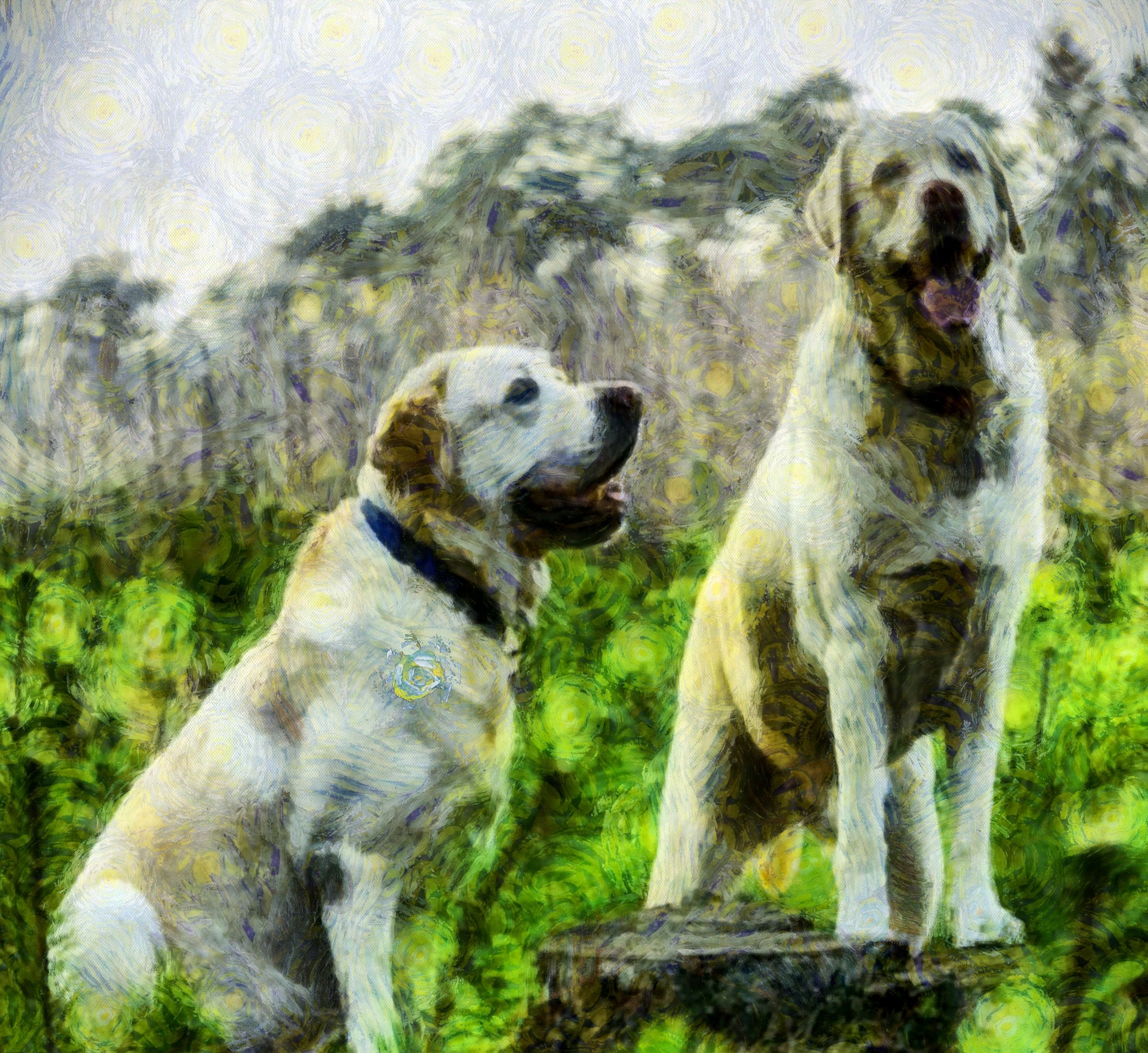 ALT TEXT - dog, two dogs, two white dogs, stock free photos, public domain image, download image for free