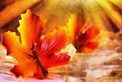 maple leaf, leaf, red leaf, fall,