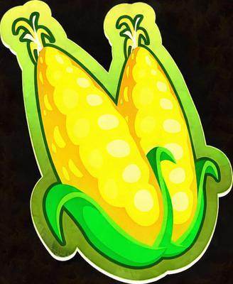 picture, maize, sweet corn, cob,