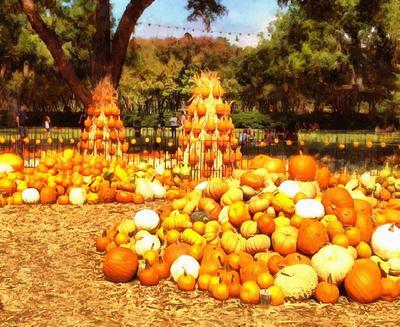pumpkin, harvest, holiday, vegetable