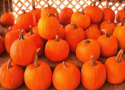pumpkins, lots of pumpkins, lots of pumpkins, holiday, halloween - halloween free image, free images, public domain images, stock free images, download image for free, halloween stock free images
