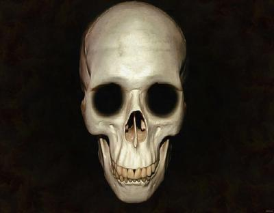 skull, head, bones, horror, halloween - halloween free image, free images, public domain images, stock free images, download image for free, halloween stock free images!