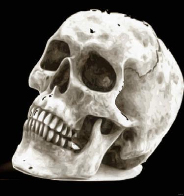 skull, head, bones, horror, skeleton, fear, smile, halloween - halloween free image, free images, public domain images, stock free images, download image for free, halloween stock free images!