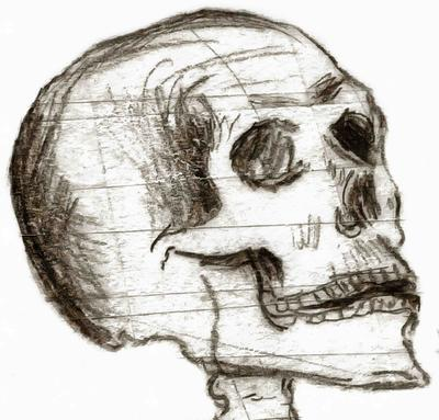 skull, head, bones, horror, skeleton, fear, smile, halloween - halloween free image, free images, public domain images, stock free images, download image for free, halloween stock free images!