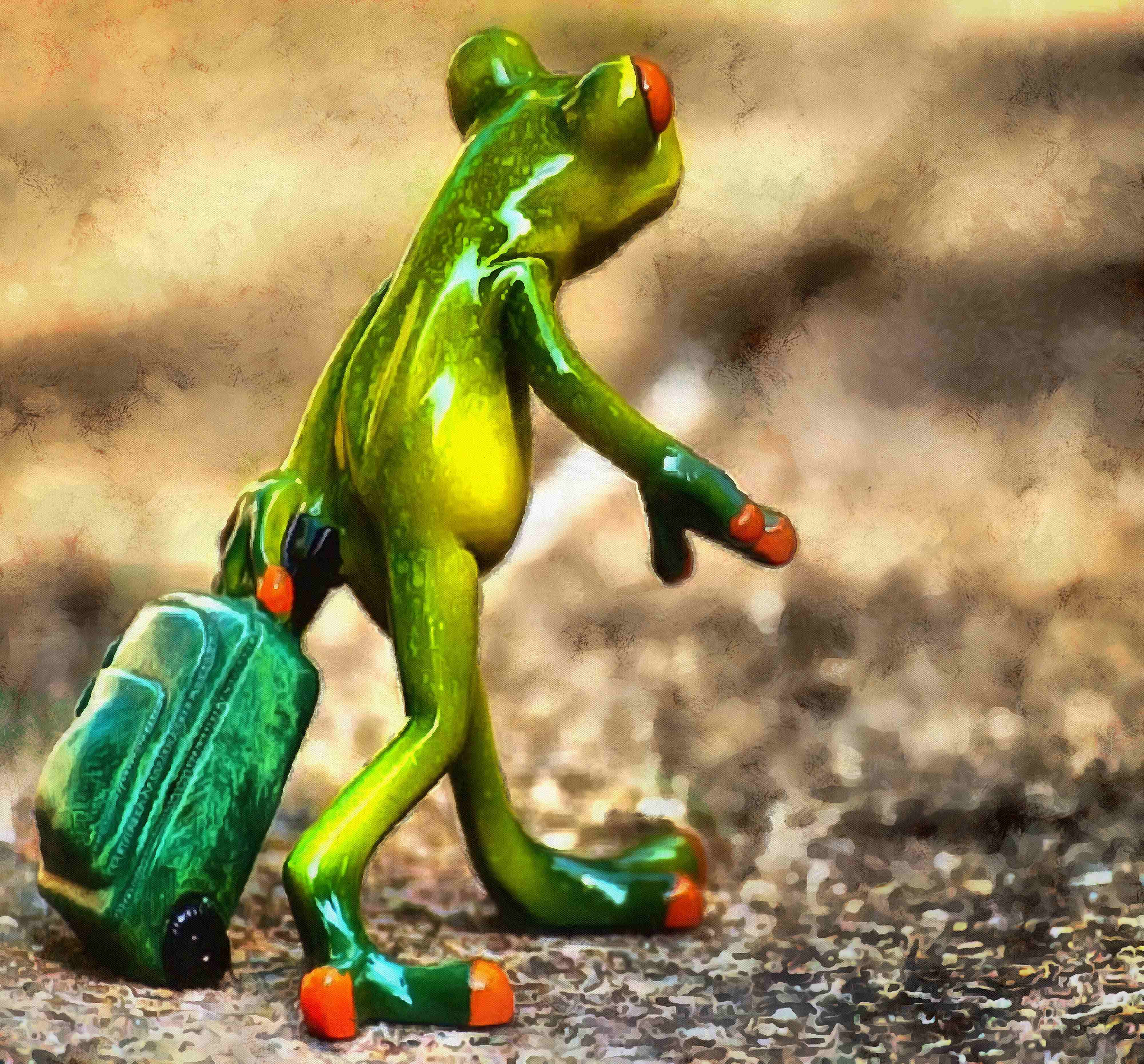 Green frog, frog, from traveller, free stock frog image, frog free photo