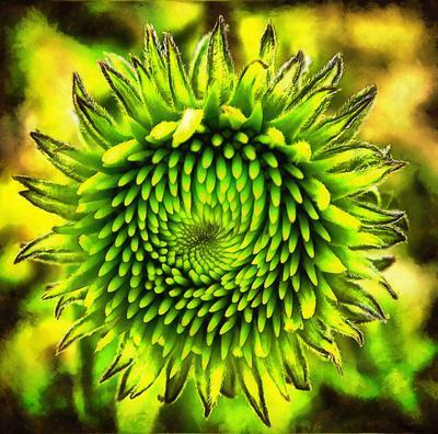 Sunflower, flower, Sunflower image, beautiful flower, Sunflower free image, stock free image, public domain image, royalty free image, free image!