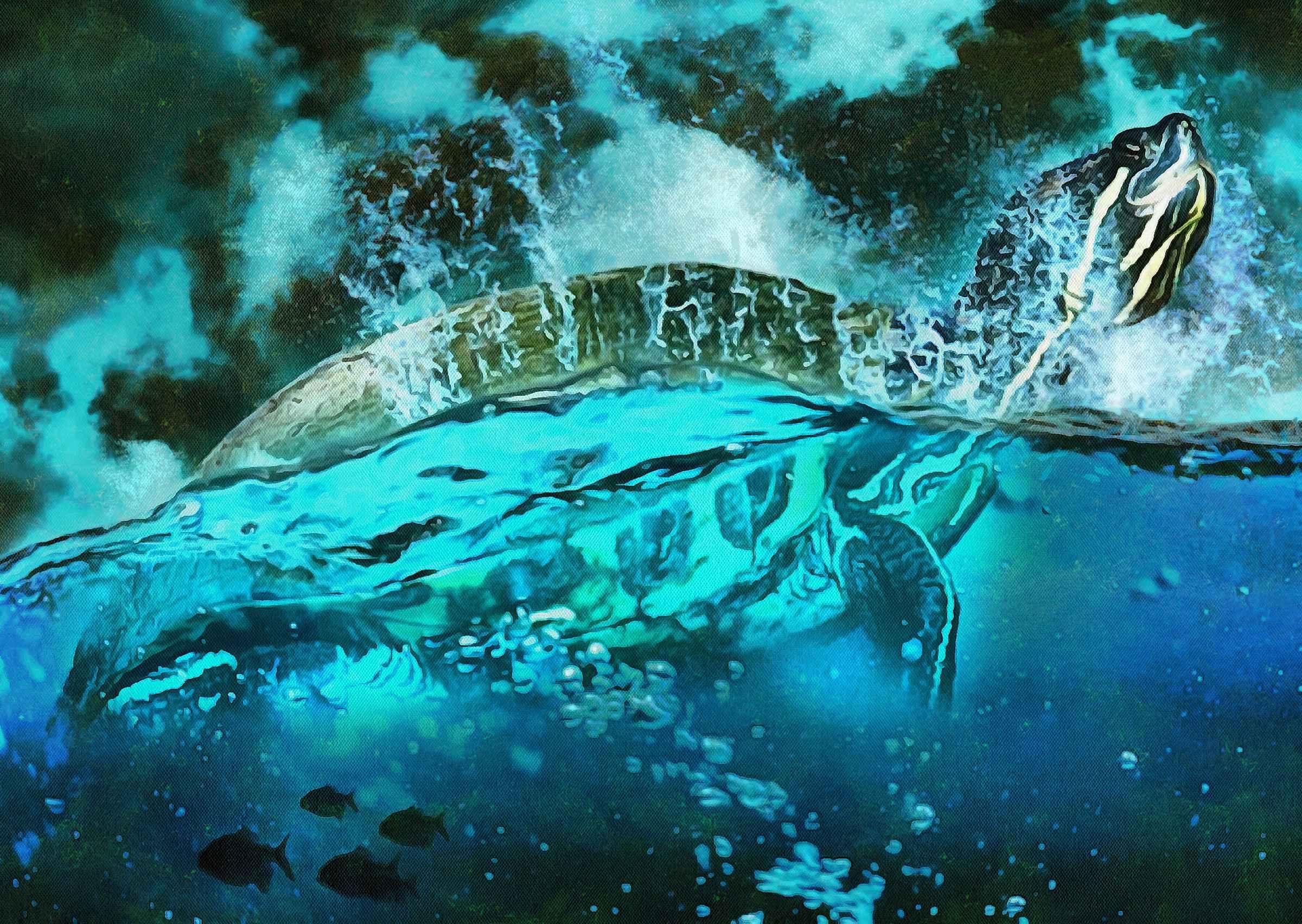 Tortoise, Turtle, loggerhead, terrapin, chelonian, leatherback, – Turtle free images, Tortoise free images, Turtle stock free images, Download free images turtles, turtle public domain images, tortoise public domain images!