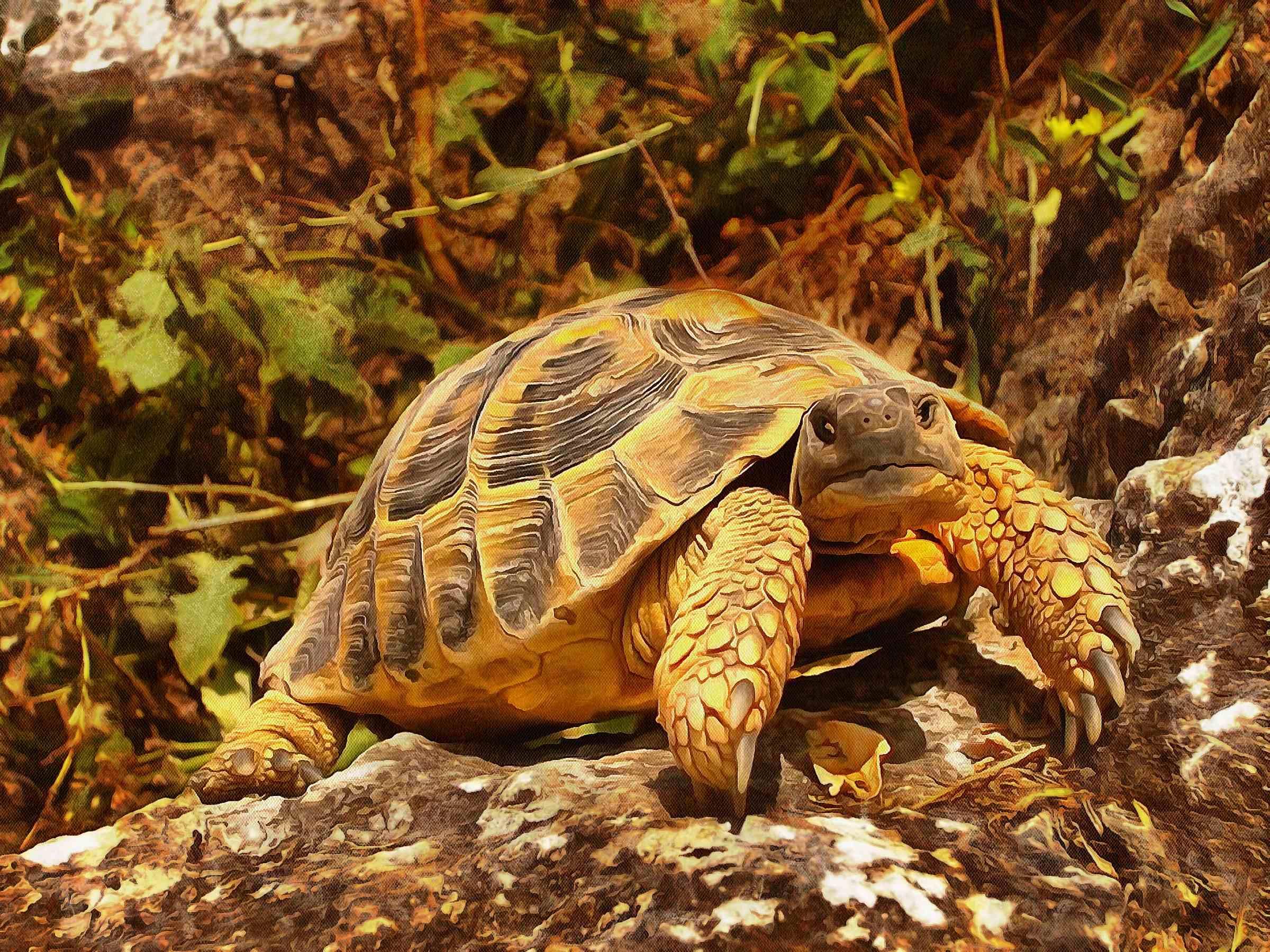 Leatherback, turtle, Turtle, Tortoise, Turtle free images,  – Turtle free images, Tortoise free , Turtle stock free images, Download free images turtles, tortoise free images, tortoise public domain images!