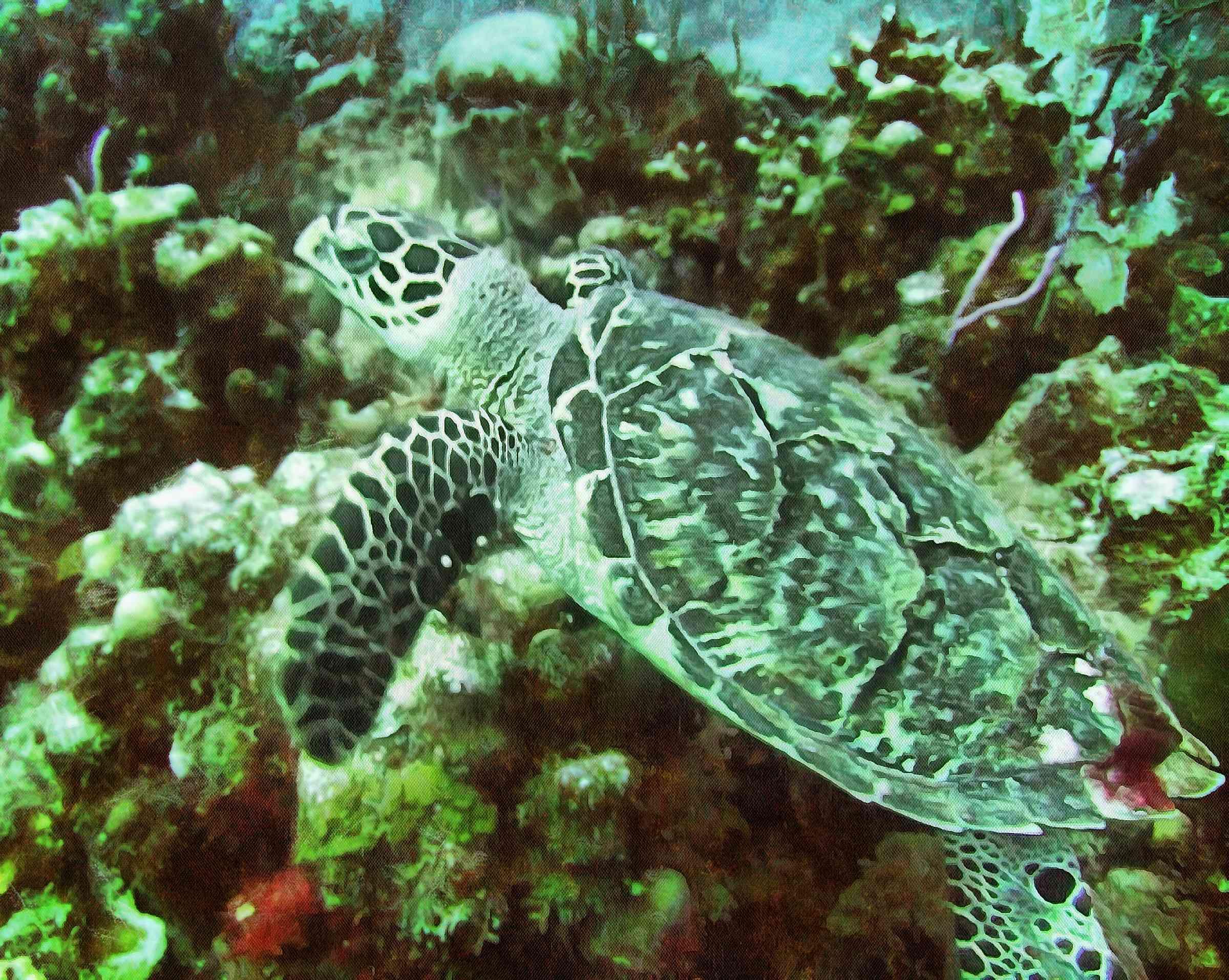 Tortoise, Turtle free images,  – Turtle public domain images, Tortoise free , Turtle stock free images, free images turtles, tortoise free , tortoise public domain images!