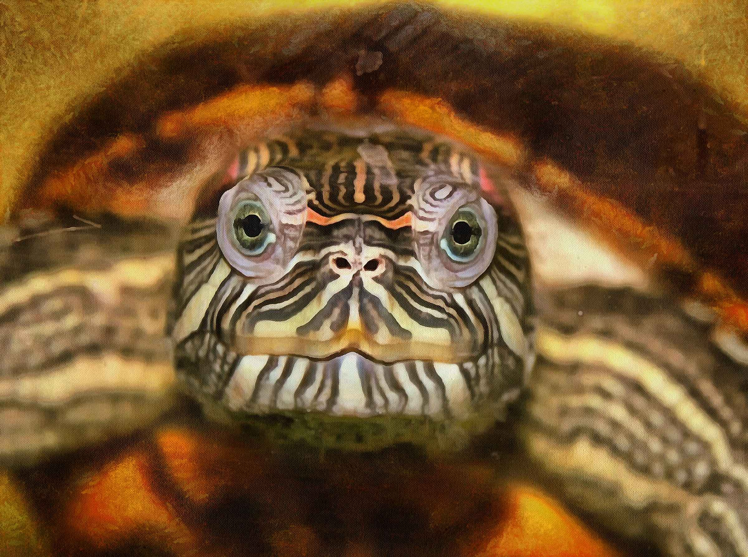 Free Tortoise images, Turtle free images,  –  Turtle stock free images, free images turtles, tortoise public domain images, Turtle public domain images, Tortoise free ,!